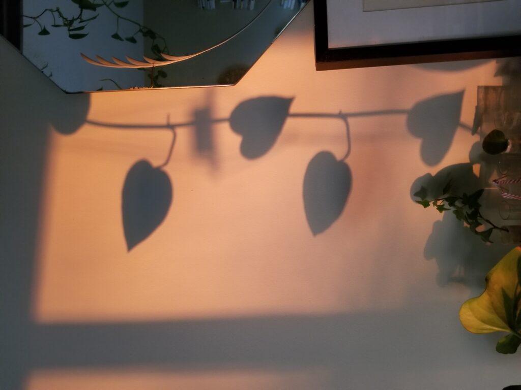 Shadow of vine leaves against a wall next to the edge or a mirror